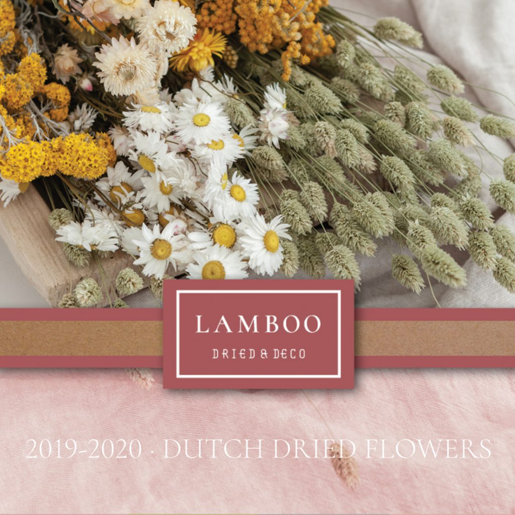 Dried Flower Catalogue