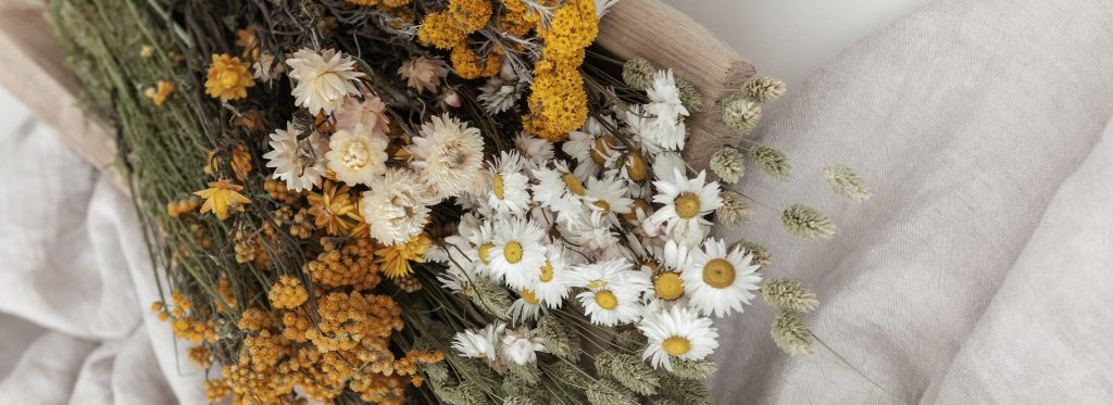 Lamboo Dried & Deco Dried Flowers