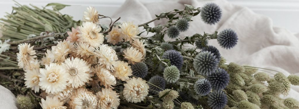 Lamboo Dried & Deco Dutch Dried Flowers