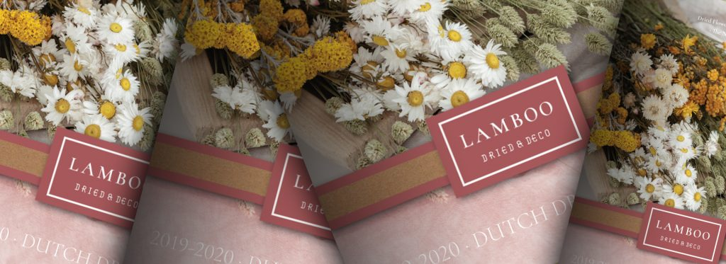 Lamboo Dried Flowers Catalogue